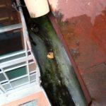 Rensing av takrenner
